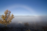 Brocken Spectrum and Fogbow